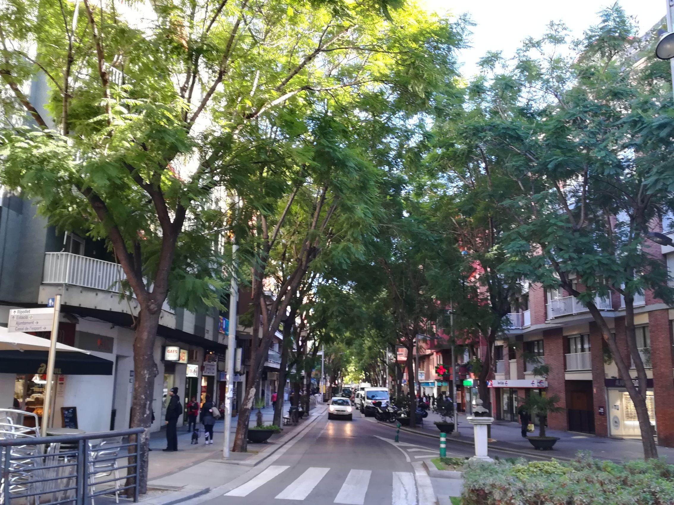 Xicrandes de l'Avinguda de Catalunya