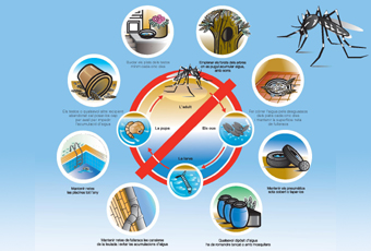 Mesures de prevenció per evitar proliferació mosquit tigre
