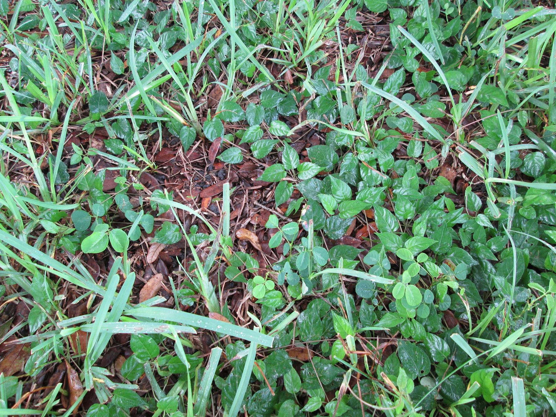 males herbes