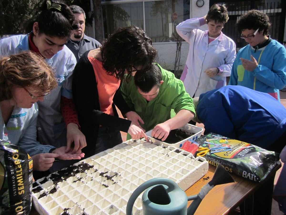 Activitat d'hort del CO Barcanova-Montflorit (foto web http://www.gsisocupacionalbarcanova.org/)