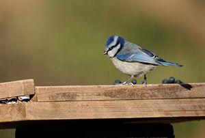 taller fotos ocells Collserola