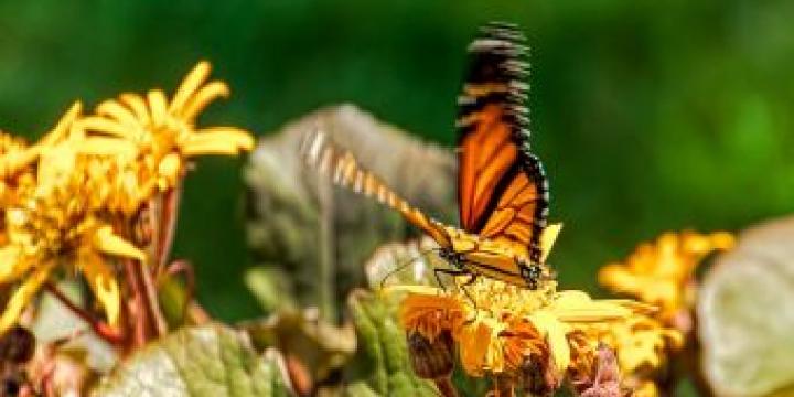 El Parc del Turonet disposarà d'un jardí de papallones