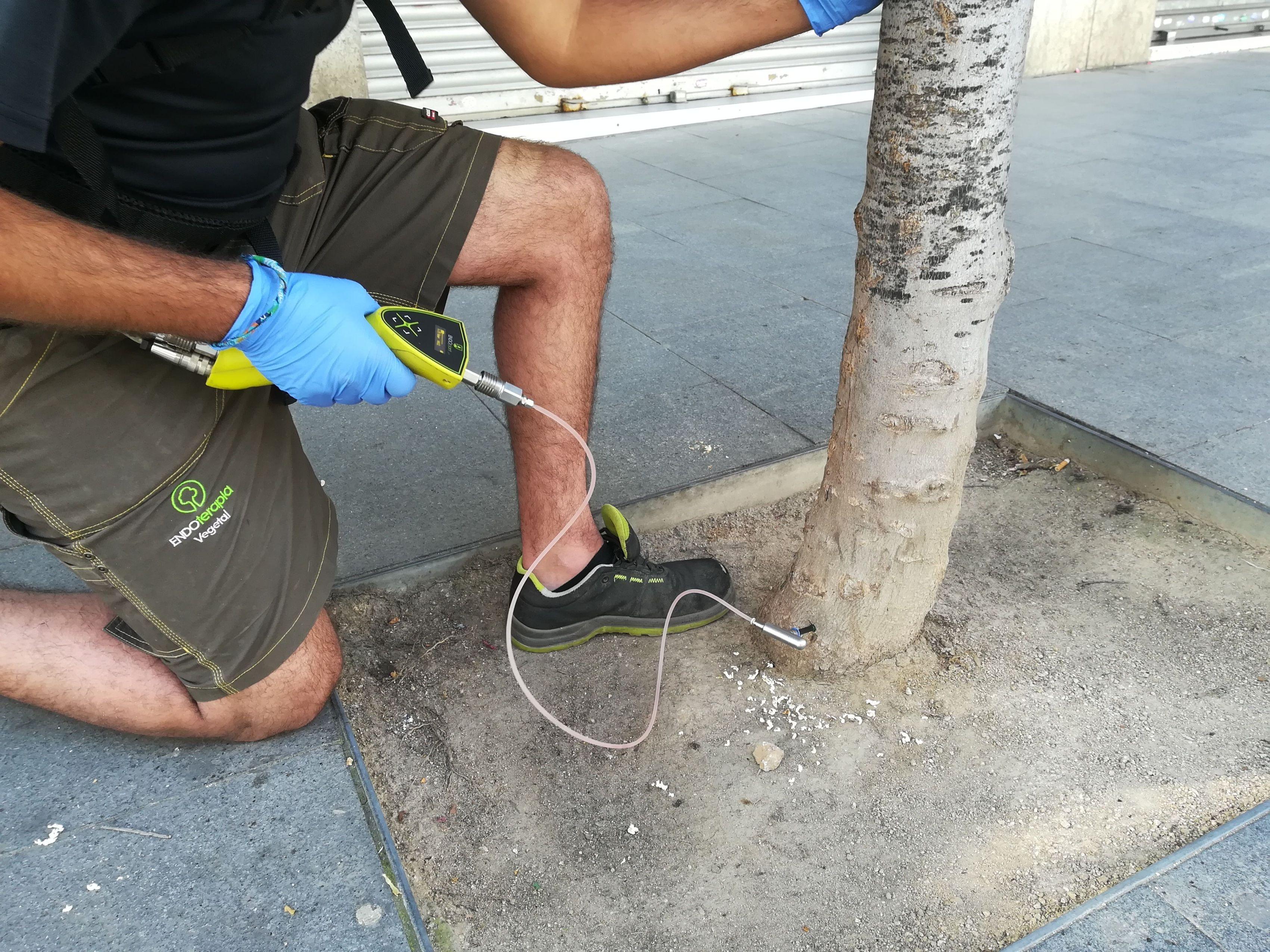 Injectant el tractament a l'arbre