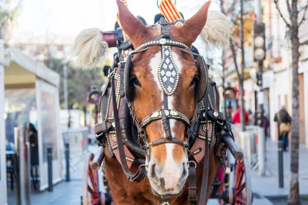 Cavall fotografiat en una passada fet a la ciutat