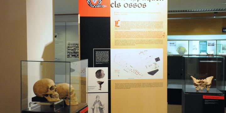 Una imatge de la mostra